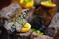 Миндо, сад живых тропических бабочек, музей бабочек на ул. Правды