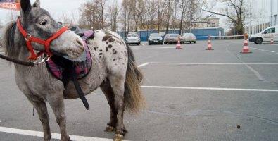 """Фотоотчет: Санкт-Петербургская международная конная выставка """"Иппосфера"""" 2011"""