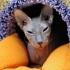 """Фотоотчет: открытие филиала Музея Кошки """"Республика кошек"""""""