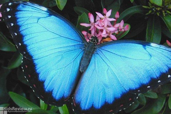 """""""Мир бабочек"""", выставка живых тропических бабочек в СПб"""