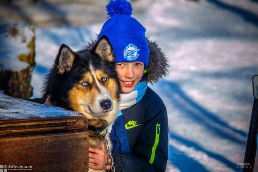 """""""Белый Ветер"""", центр ездовых собак хаски, проведение детских дней рождения в Ленобласти"""