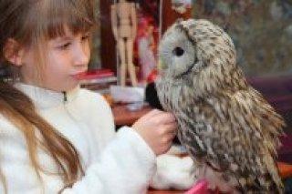 Лепка из полимерной глины, сова своими руками для детей 7-12 лет в студии Джампингклей в Озерках, СПб