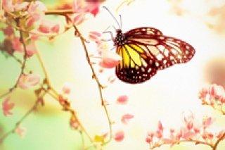 Экскурсия для детей до 10 лет в сад бабочек в Петербурге